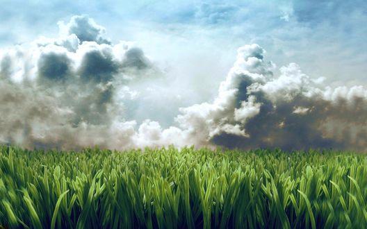 Обои Над полем собираются облака, чувствуется приближение дождя