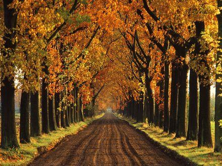 Обои Осенние деревья растут вдоль длинной дороги