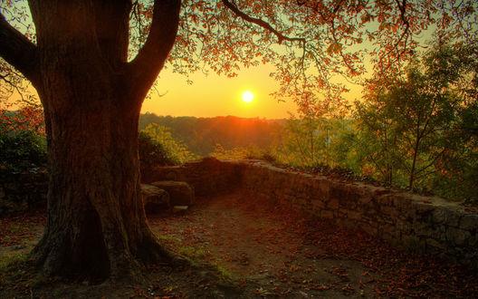 Обои Старое дерево позолочено последними лучами заходящего солнца