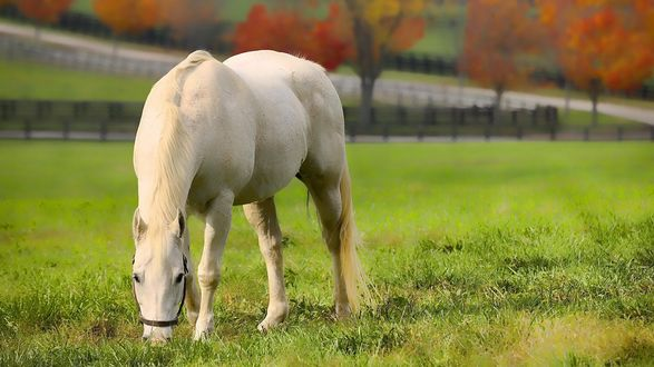 Обои Белая лошадка пасётся на травке