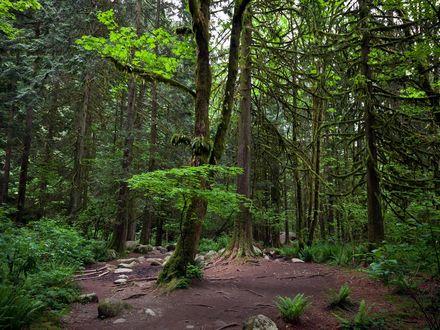 Обои Поляна среди хвойного леса