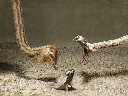 Обои Змея и страус в охоте за ящеркой