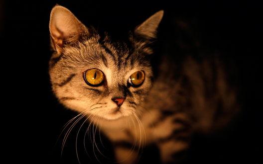 Обои Кошка в темноте