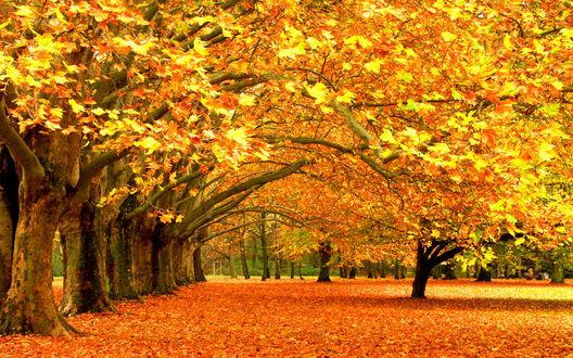 Обои Осенние деревья в солнечный день