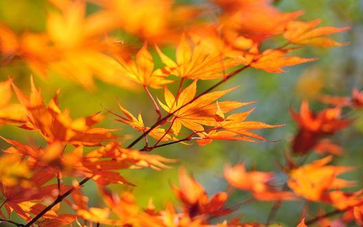 Обои Осенняя ветка