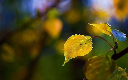 Обои Осенняя веточка