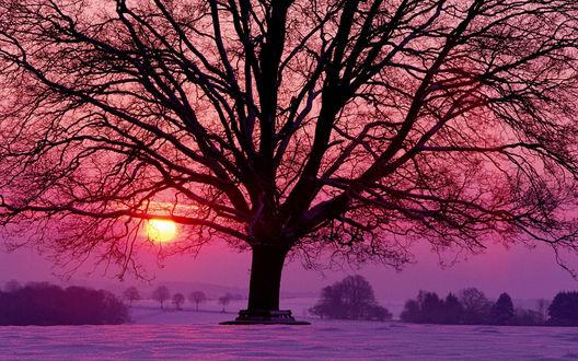 Обои Дерево на фоне заката