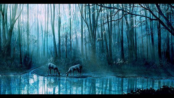 Обои Олени в лесу на водопое