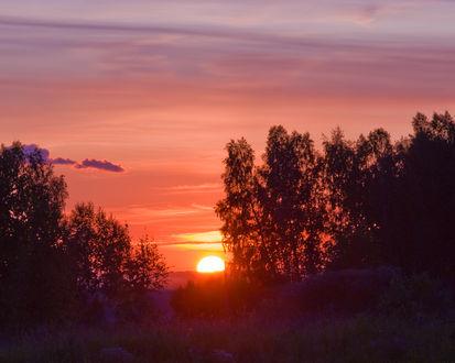 Обои Заходящее солнце просвечивает сквозь кроны деревьев