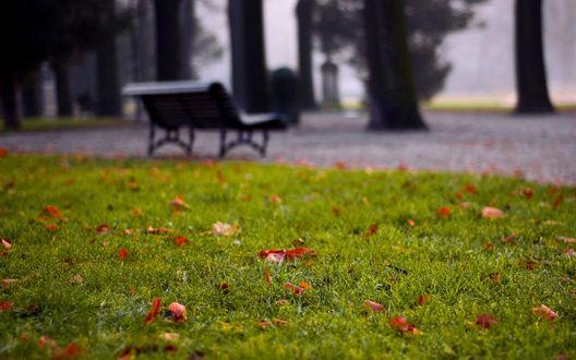 Обои Парк осенью
