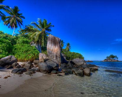Обои Пальмы со скалами рядом с морем