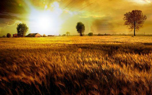 Обои Закат над полем