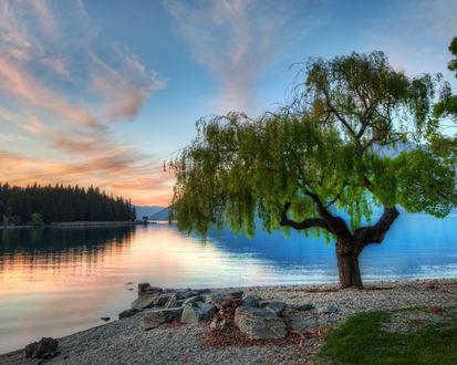 Обои Цветущее дерево на каменистом берегу озера