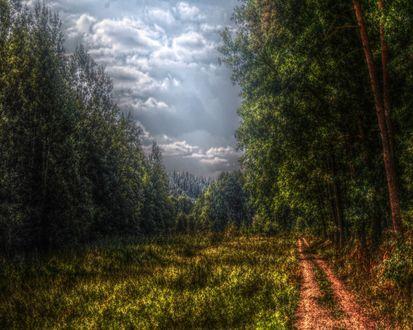 Обои Дорога в густом лесу перед грозой