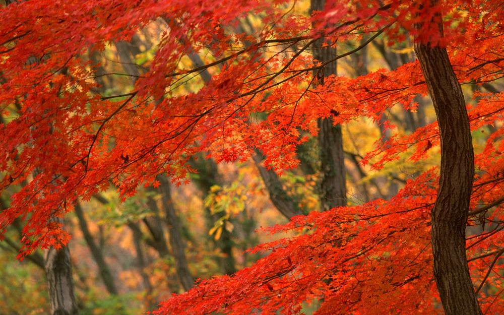 Обои для рабочего стола Осенний лес