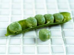 Фортун максим яковлевич зелёные яйца с ветчиной - самиздат