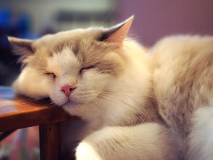 Обои Спящий кот