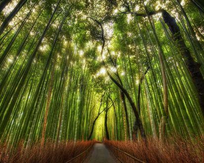 Обои Дорога через бамбуковые заросли