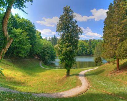 Обои Дорожка ведущая к озеру через лес