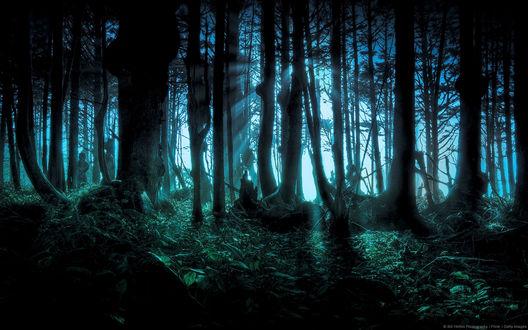 Обои Таинственный лес с призраками