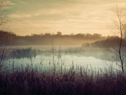 Обои Утренний туман над лесным водоемом