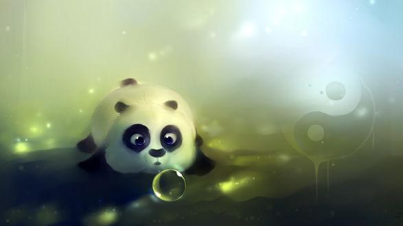 Обои Панда смотрит на мыльный пузырь