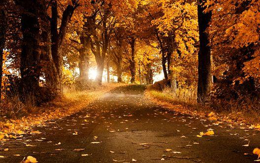 Обои Лесная дорожка, усыпанная осенними листьями