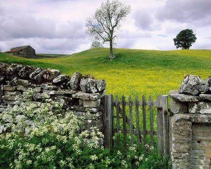 Обои Заросший каменистый забор с калиткой с видом на поле с желтыми цветами под пасмурным небом