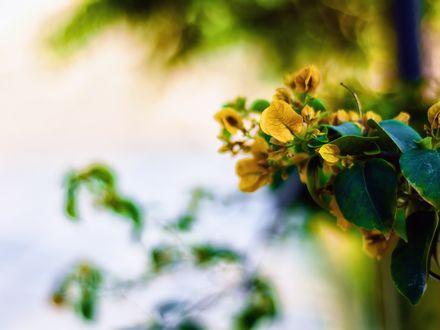 Обои Желтые и зеленые листики