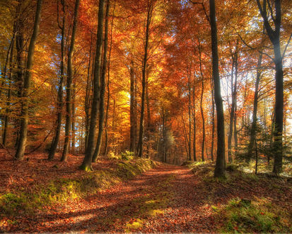 Обои Тропинка в осеннем лесу усыпанная листьями