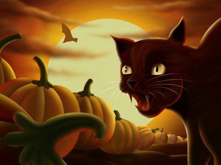 Обои Хеллоуин- чёрный кот, полнолуние, тыквы, летучие мыши