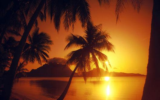 Обои Пальмы на берегу океана в лучах заходящего солнца