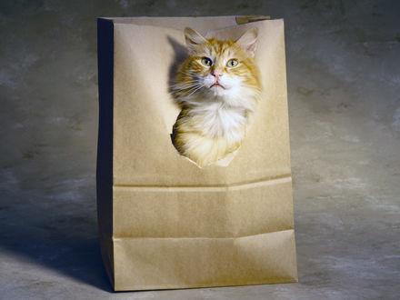 Обои Кот сидит в бумажном пакете