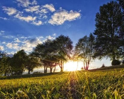 Обои Лучи солнца проходят через деревья и ложатся в поле