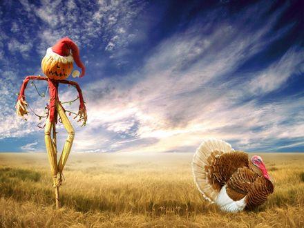 Обои Чучело с головой в виде светильника Джека в поле  кровожадно поглядывает на индейку