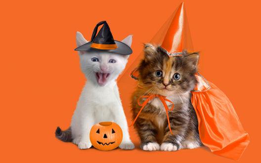 Обои Наряженные котята готовы к встрече праздника Хэллоуин / Haloween