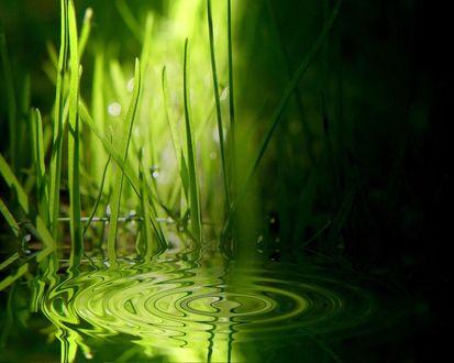 Обои Трава и круги на воде