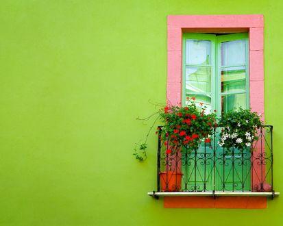 Обои Маленький балкончик с цветами на зелёной стене