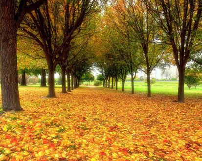 Обои Осенний парк усыпанный листьями