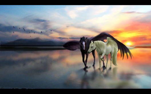 Обои Два крылатых коня, вороной и белый, на морском берегу