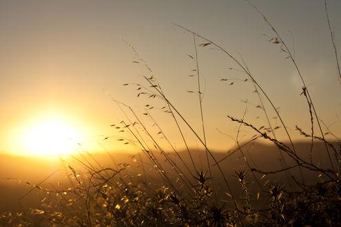 Обои Трава на фоне заката