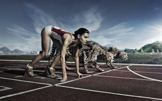 Обои Девушка-спринтер стартует вместе с леопардами