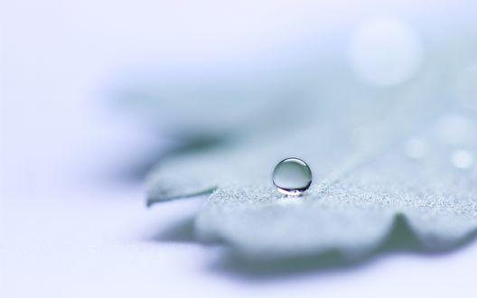 Обои Капелька воды на листике покрытом инеем
