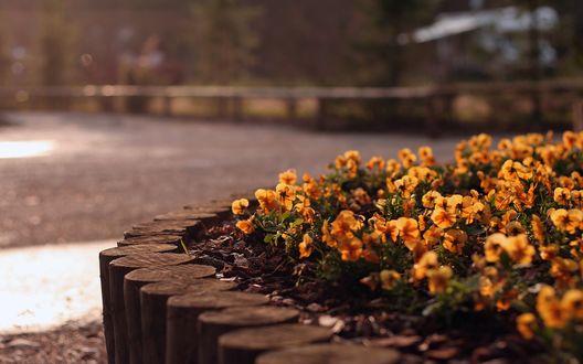 Обои Маленькие цветочки на клумбе