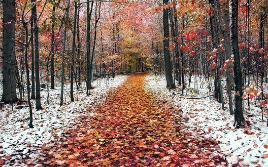 Обои Тропинка устланная осенними листьями идущая сквозь заснеженный лес