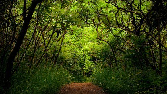 Обои Красивый лес с богатой зеленью