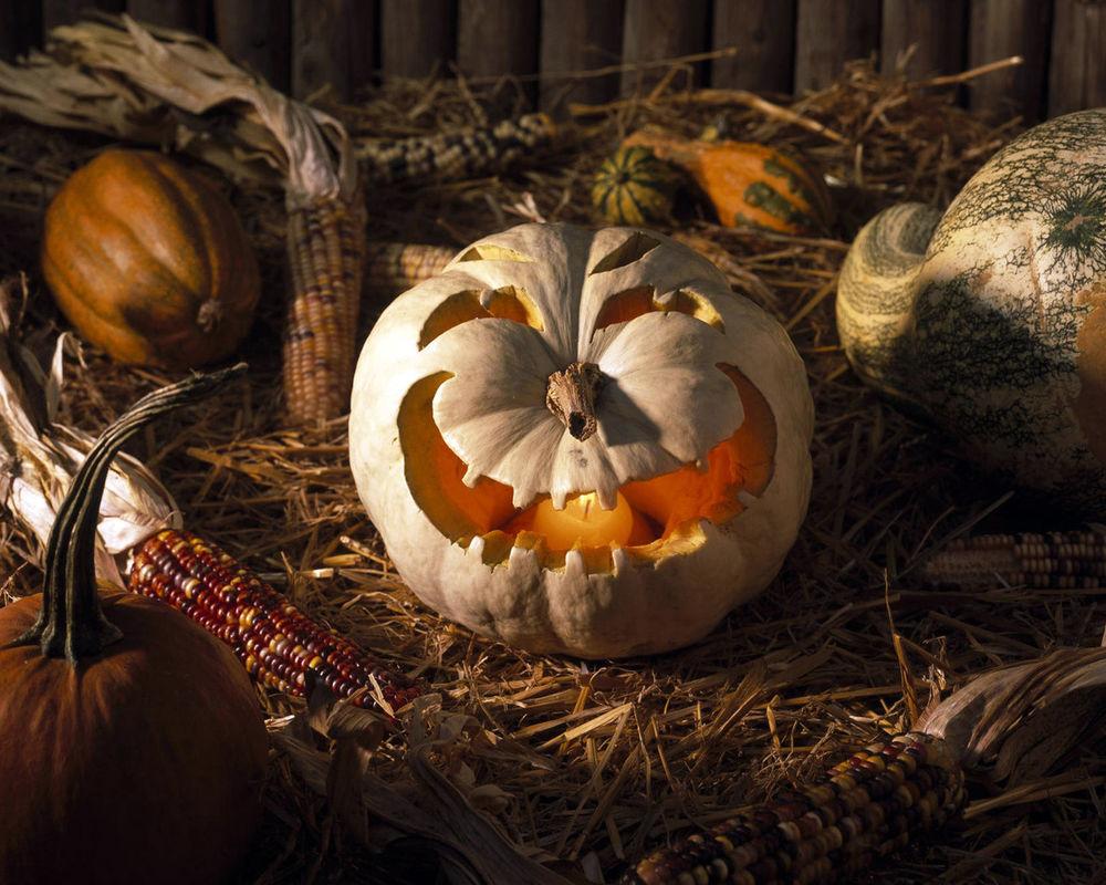 Обои для рабочего стола Светильник Джека, вырезанный из тыквы, лежит на кукурузном поле в Хэллоуин / Haloween