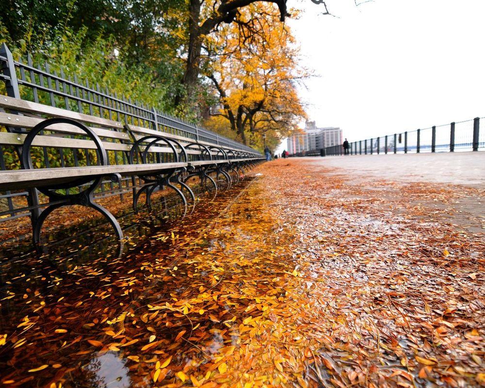 Обои для рабочего стола Лавочки на набережной усыпанные осенними листьями