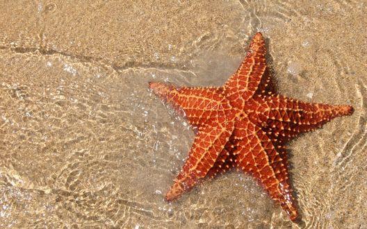 Обои Морская звезда на песке