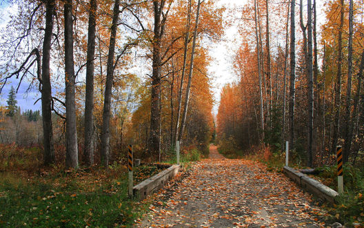 Обои Дорога усыпанная осенними листьями